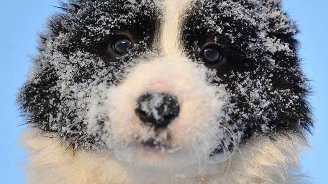 tlmd_04_perros_invierno1